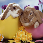 Easter Trivia- The Bunny and the Eggs